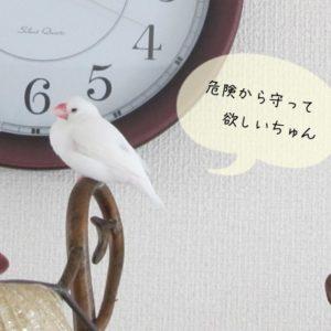 放鳥で注意すべき事