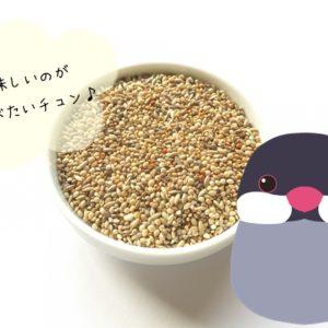文鳥が喜ぶエサと食べ物