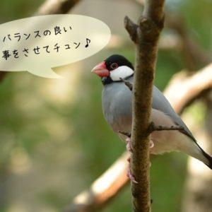 文鳥に必要な栄養とは