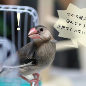 文鳥のケガの予防策・対処法