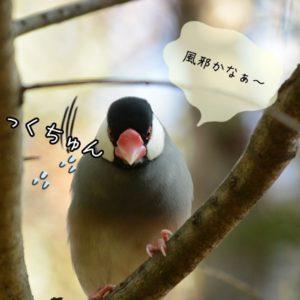文鳥に多い病気の症状と対処法