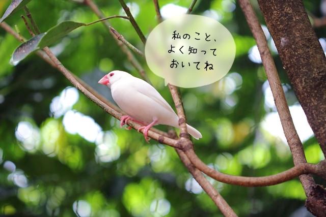 文鳥の春夏秋冬・世話の仕方や注意すべき点