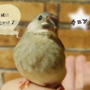 文鳥と外出する際に配慮すべき事