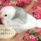 飼い主ができる文鳥の健康管理