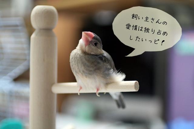 ほかのペットと文鳥を一緒に飼う際の注意点とは