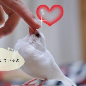 文鳥とのコミュニケーション法