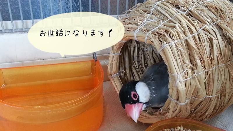 文鳥の糞尿の臭いの消し方
