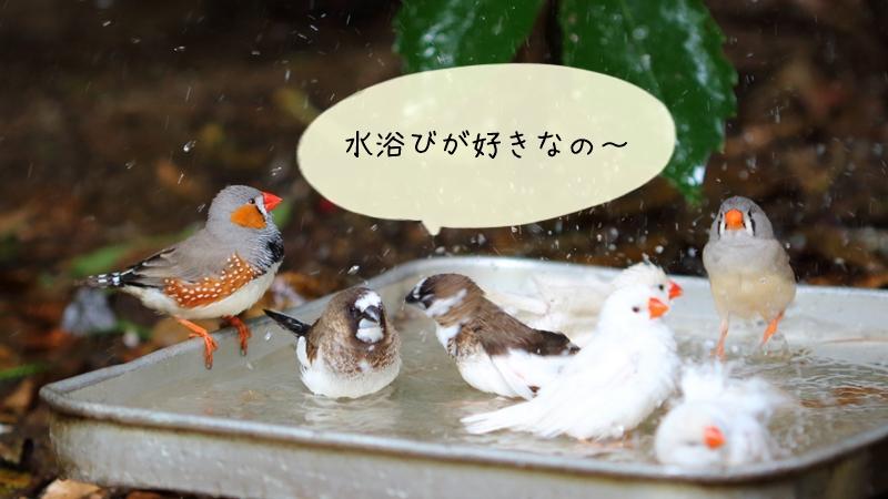 文鳥の体臭が気になる場合