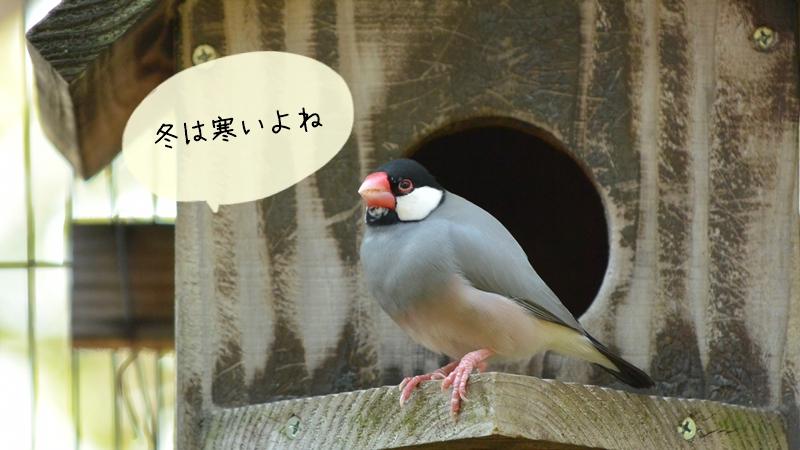 季節ごとの文鳥の臭いの違いと対処法