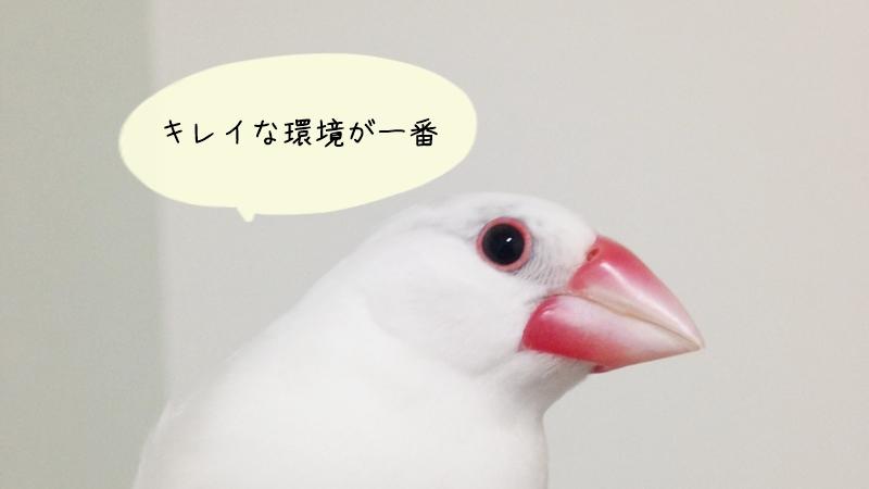 文鳥の臭い原因と対策のまとめ