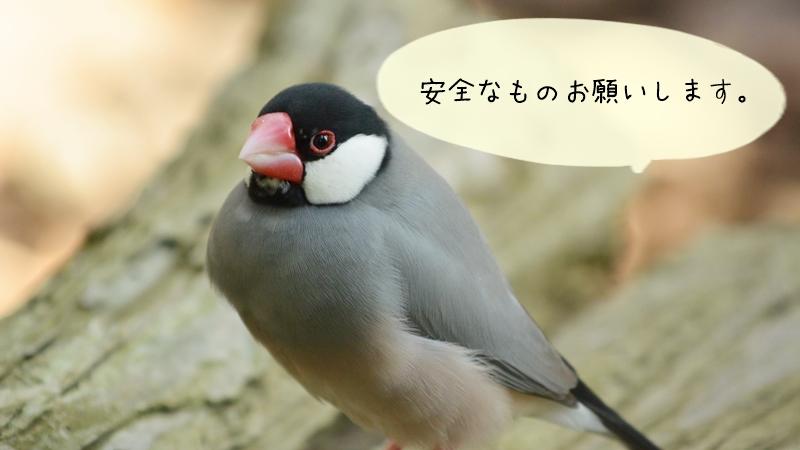 文鳥の臭い対策で市販の消臭剤ではダメな理由